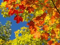 Das Laub der Blätter färbt sich im ganzen Land orangerot - © Foto: lenomadecom / fotolia.com