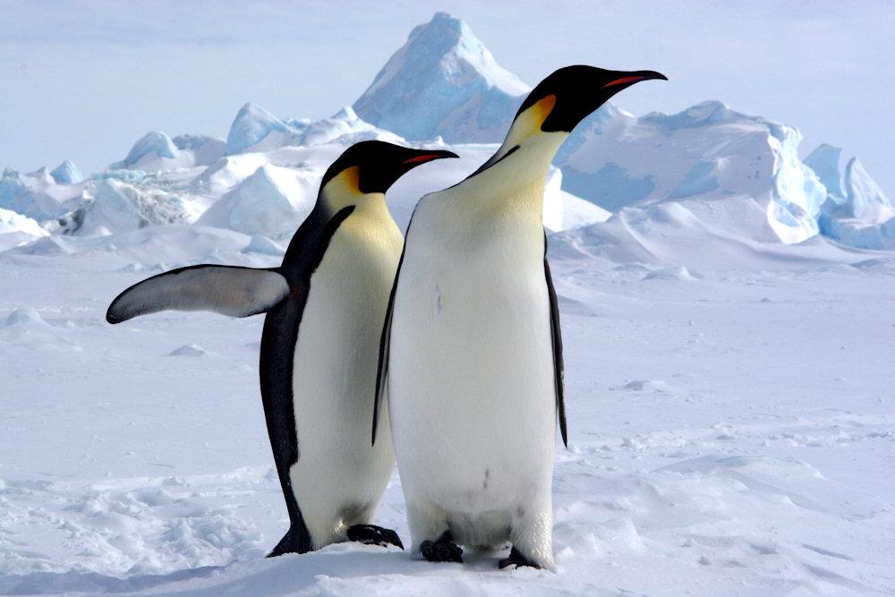 expeditions kreuzfahrten in die antarktis. Black Bedroom Furniture Sets. Home Design Ideas