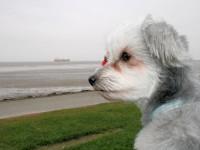 auch Hunde können auf Kreuzfahrten gehen!