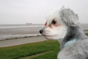 Hunde auf Kreuzfahrt