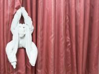 Handtuch-Affe / Foto: Rob Byron - Fotolia